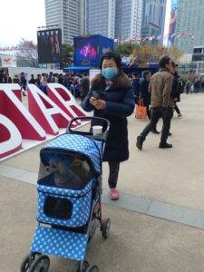 גברת קוריאנית מבוגרת לוקחת בעגלת תינוק את כלב המחמד שלה - תוצאה של ירידה בילודה